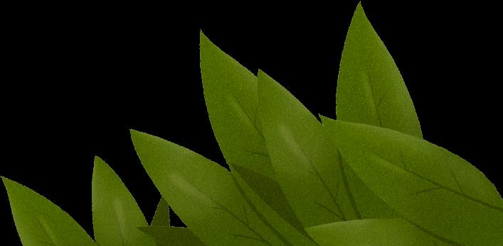 Illustration feuilles background