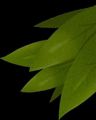 Illustration feuilles