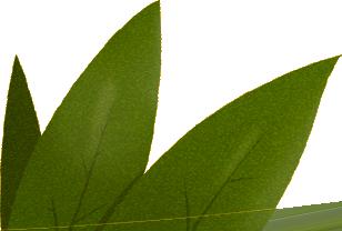 Negrita illustration feuilles